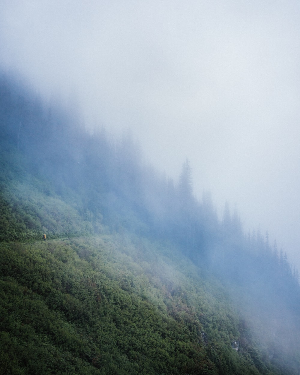 mountain covered tree