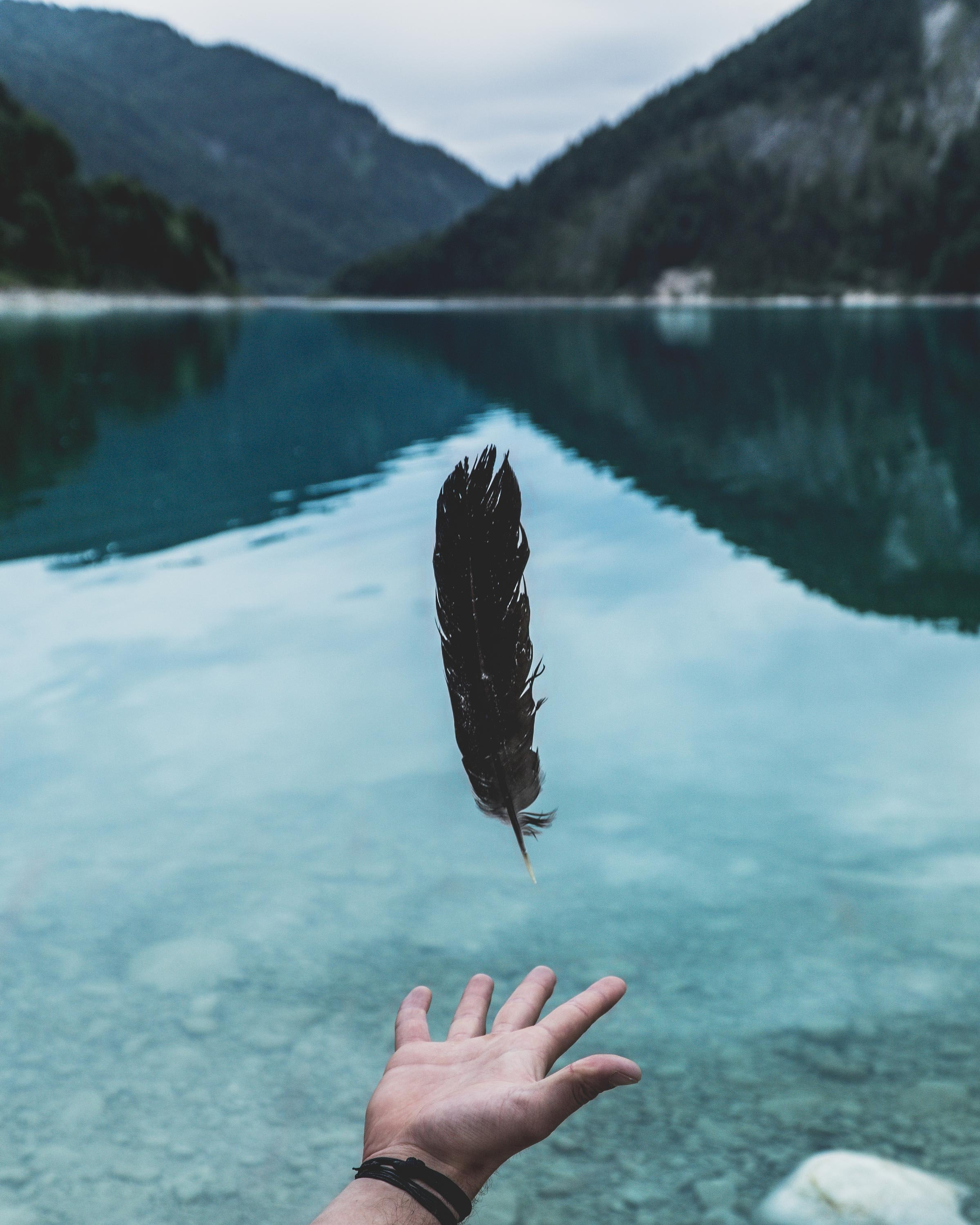 person attempting to grab feather floating beside water