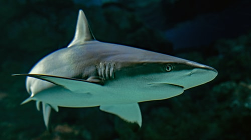 Interesting facts about Shark Biology