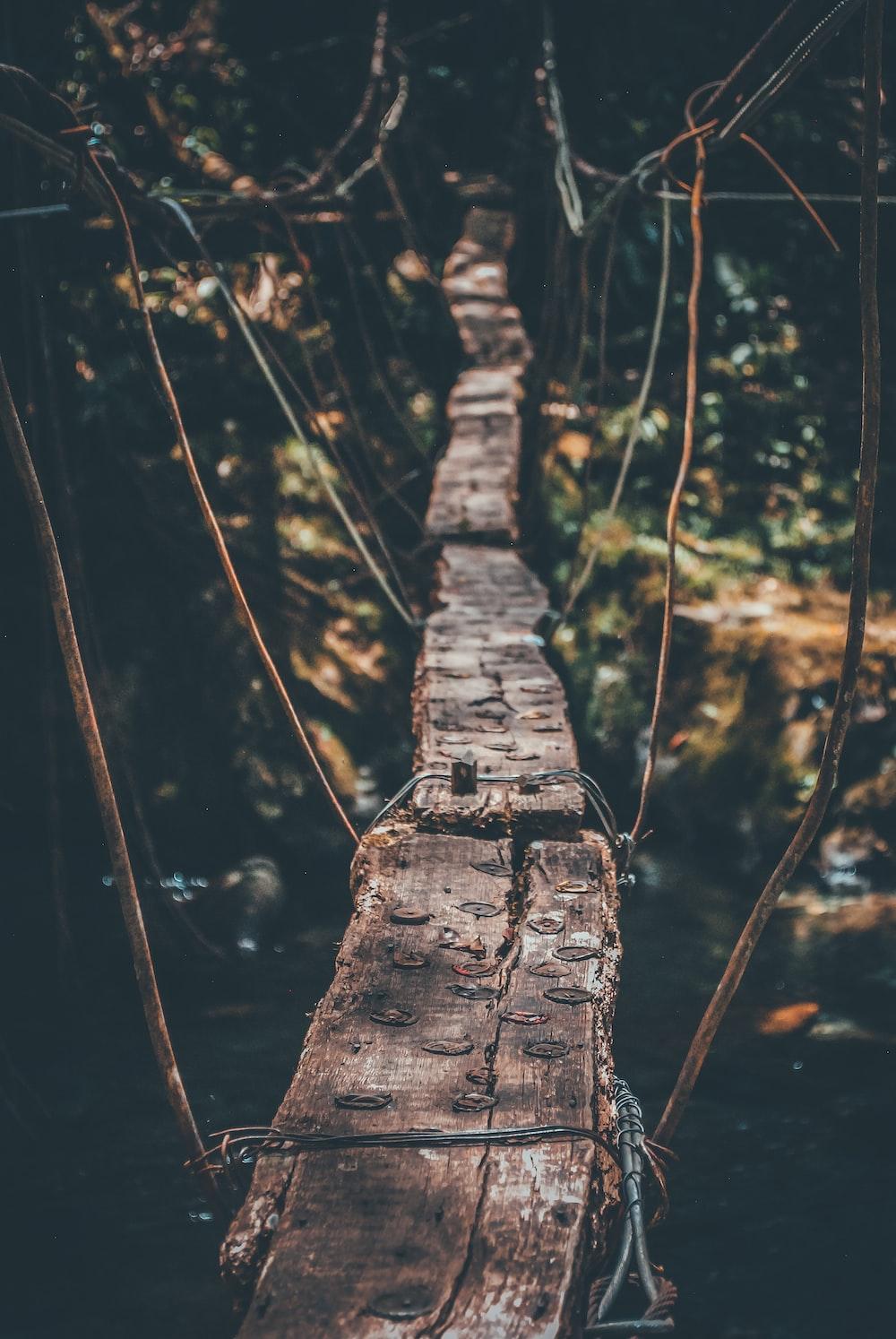 hanging bridge above water