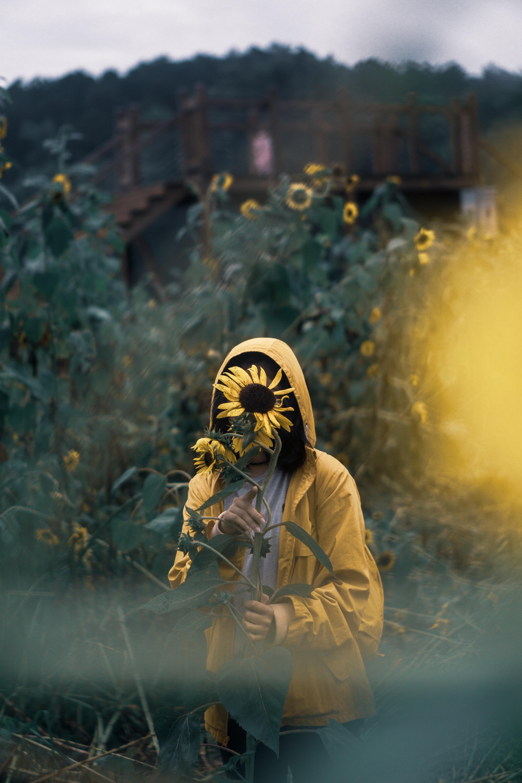person standing behind sunflower