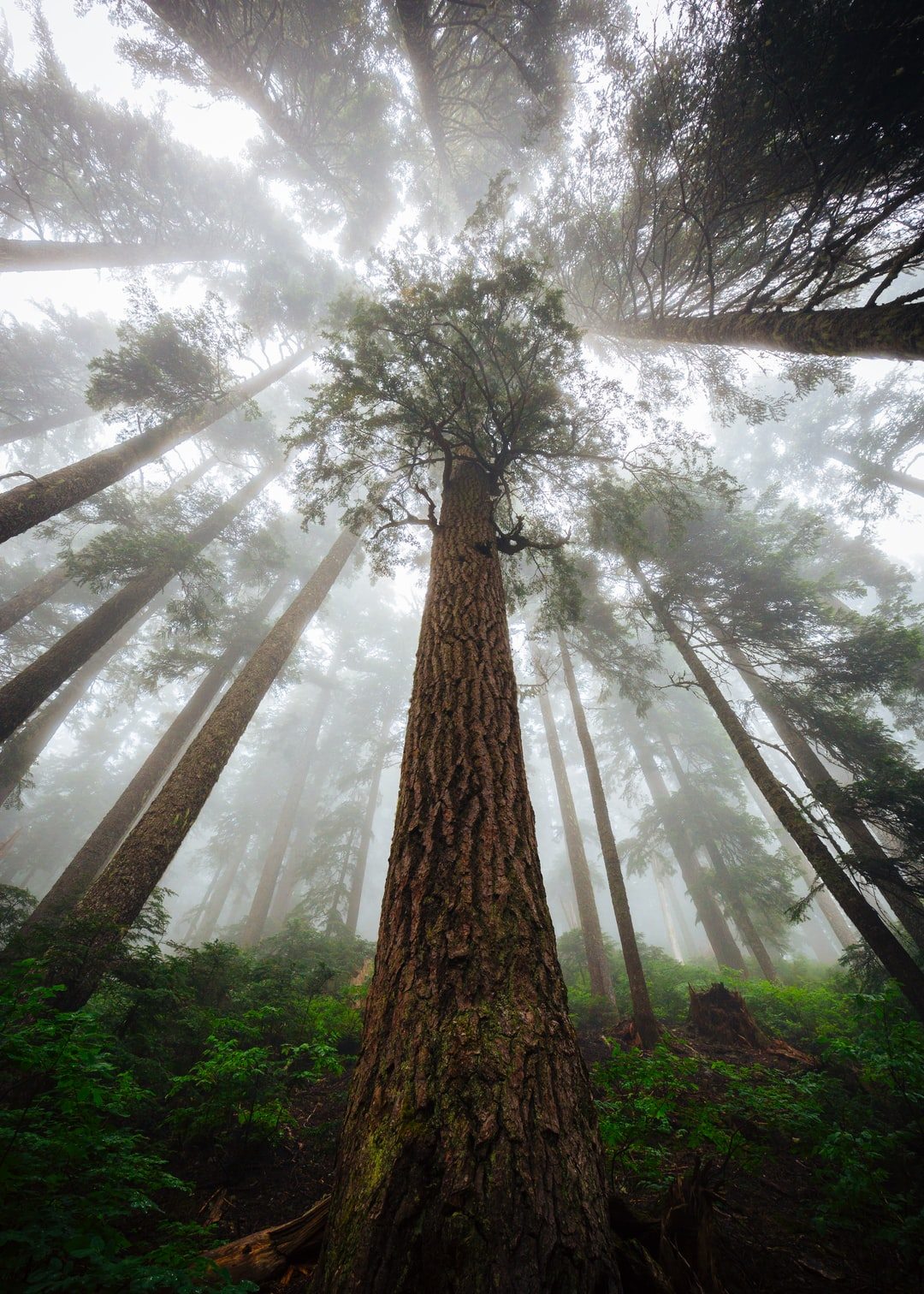 Foggy forests are one of my favorite experiences.