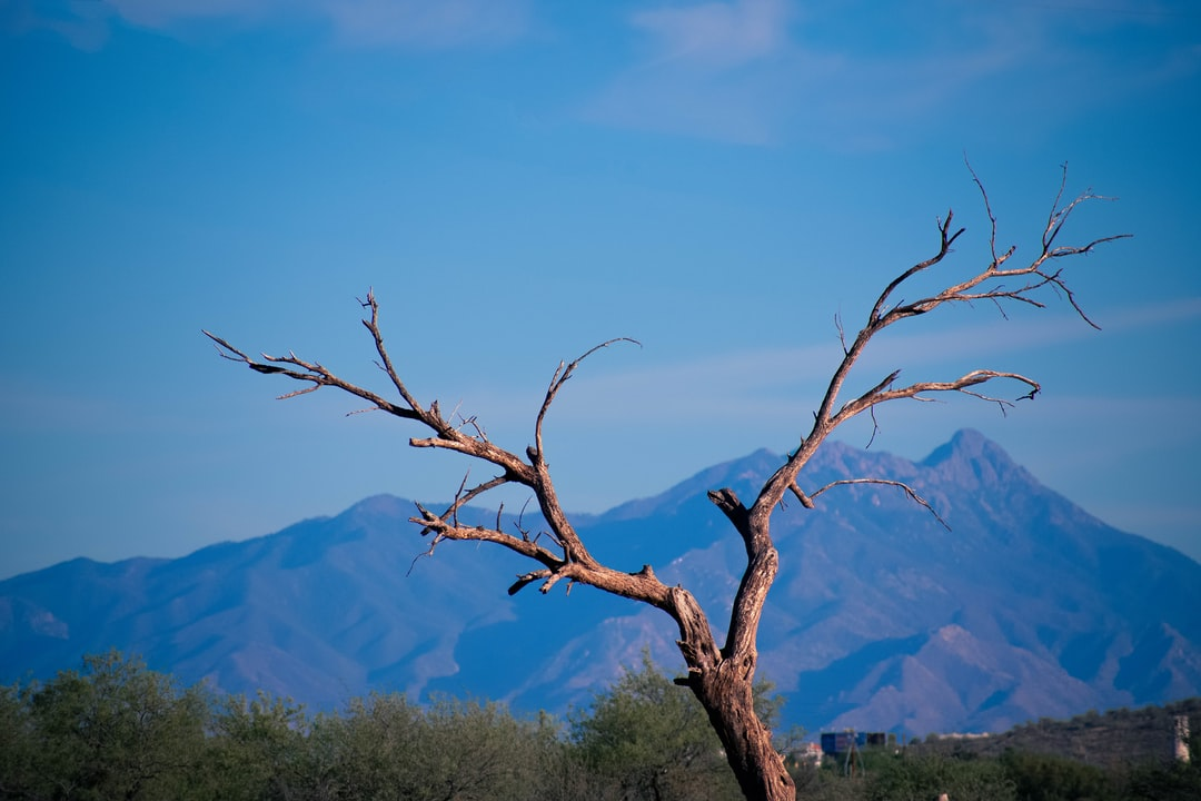 This photo really shows the contrast of the desert. A lone dead tree with the scenery of a mountain and a host of thriving Locust trees behind it. I wonder what tree it was? In any case the contrast of life and death fits the desert perfectly.