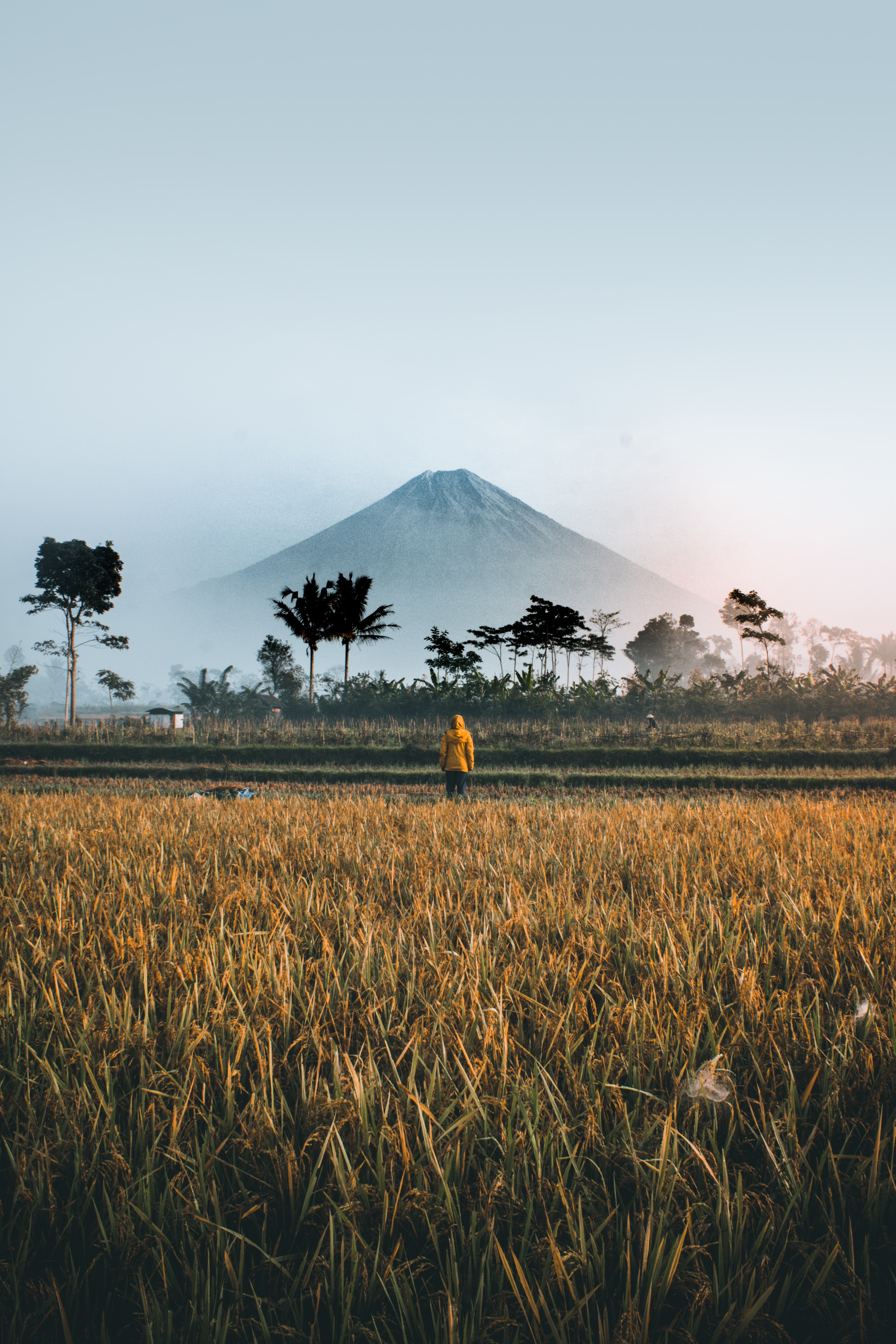 500+ Stunning Indonesia Pictures  Download Free Images on Unsplash