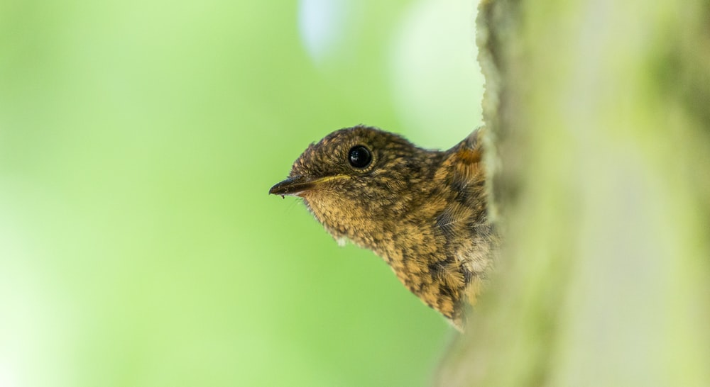 macro shot of brown bird on tree branch