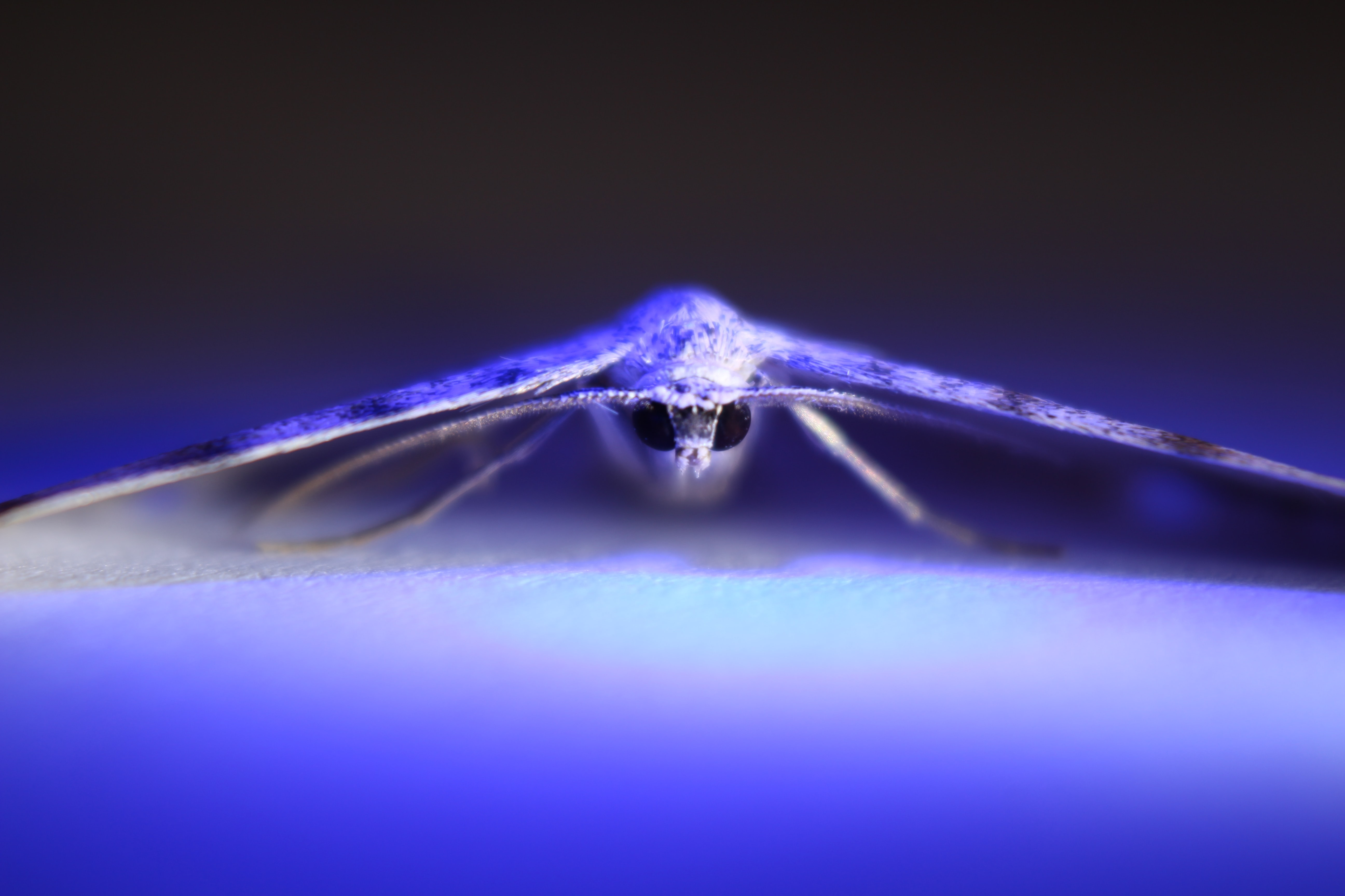 macro photography of white insect