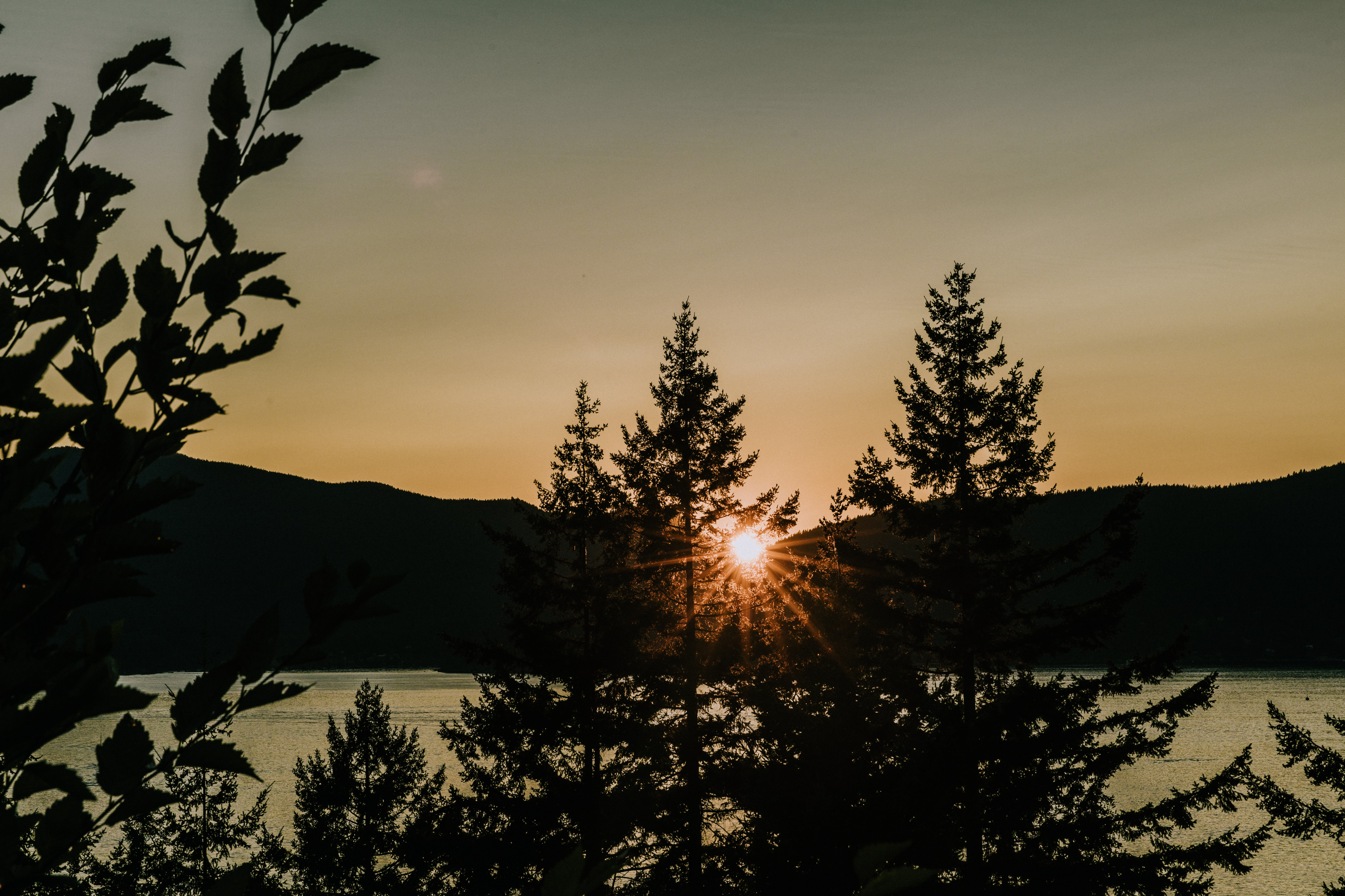 tree near body of water and mountain range under golden hour silhouette