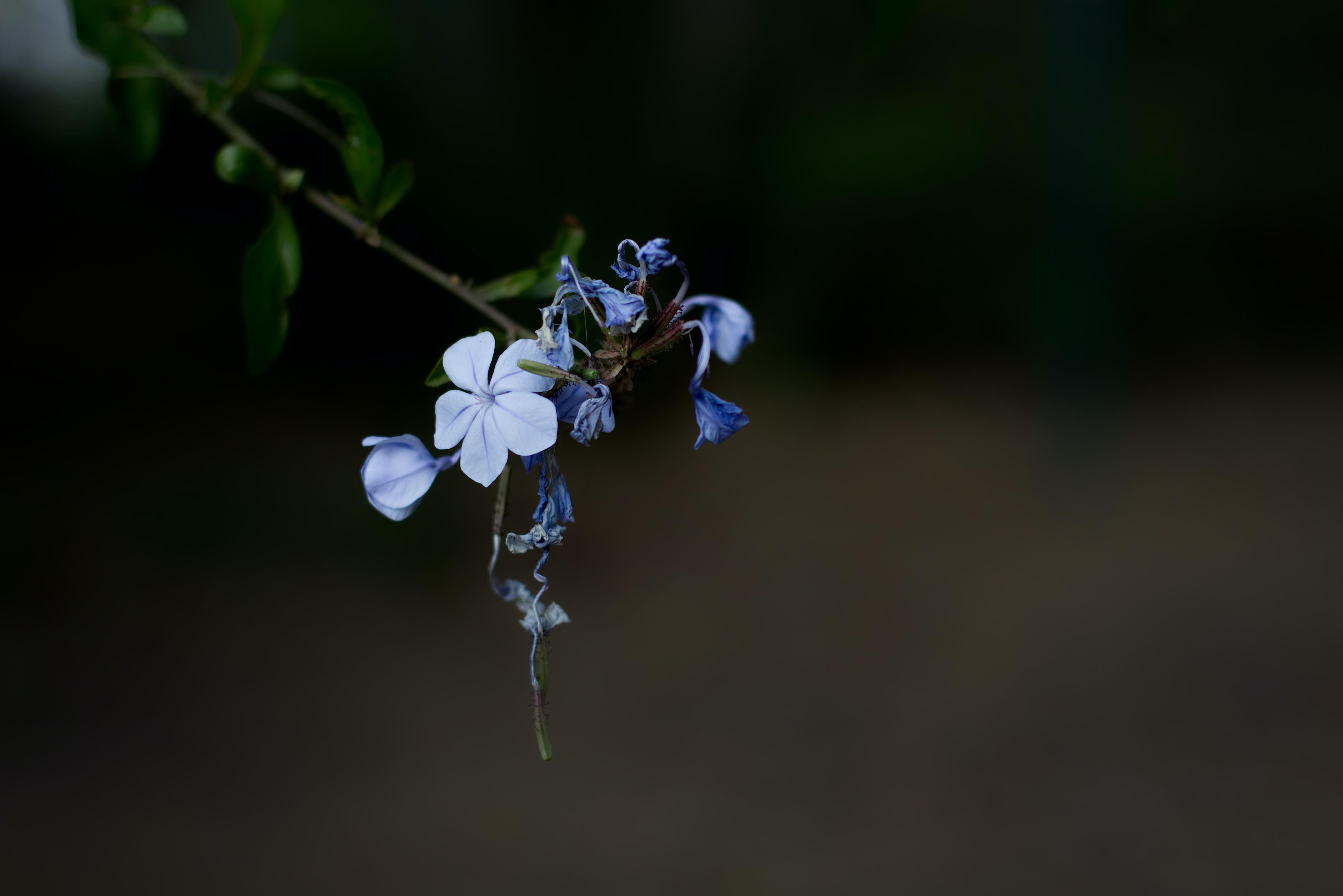selective focus photograph of purple petaled flower plant