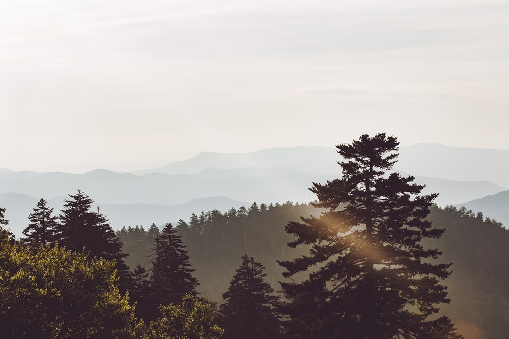 scenery of trees and mountain