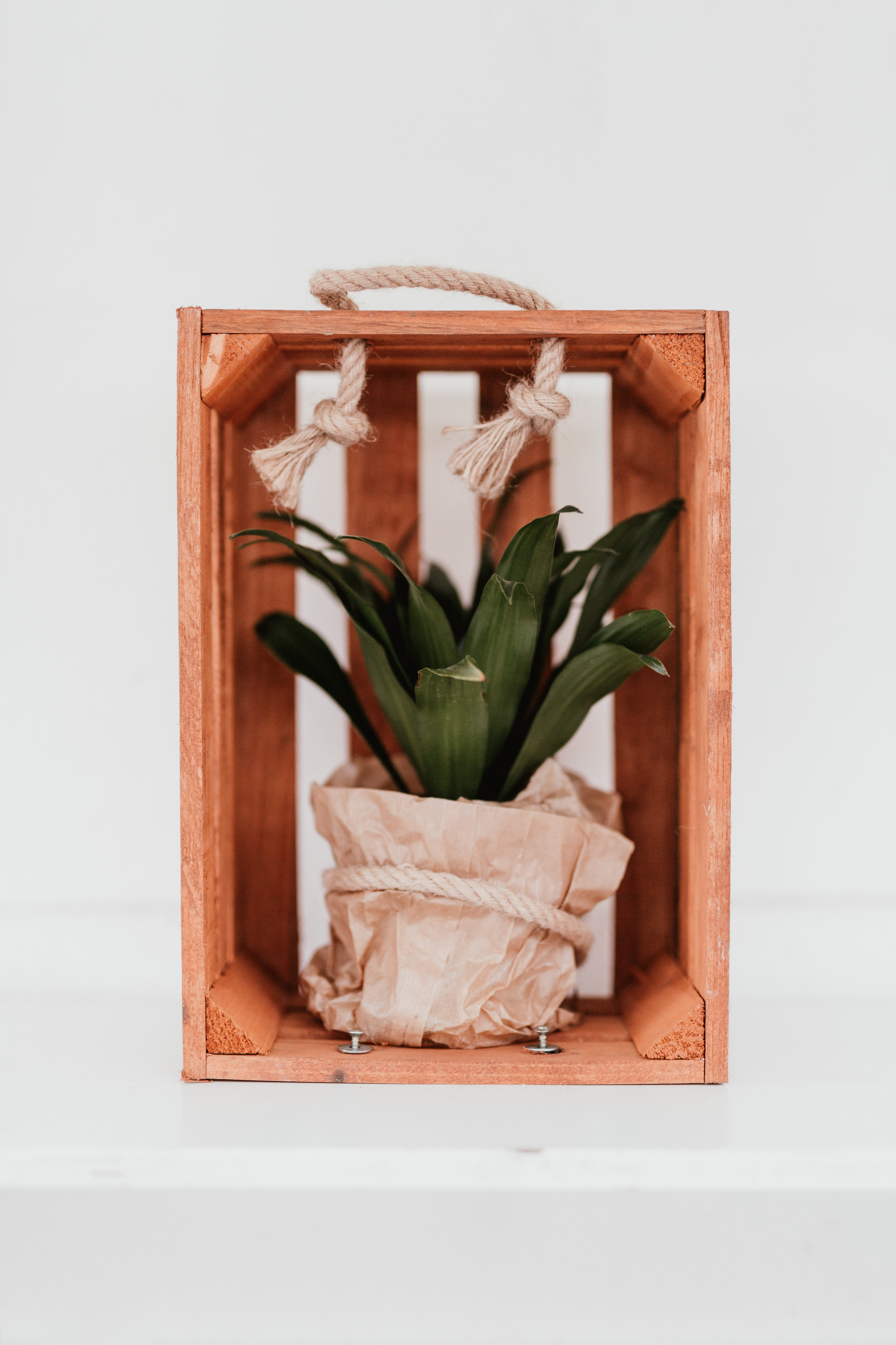 green plant in brown wooden crate