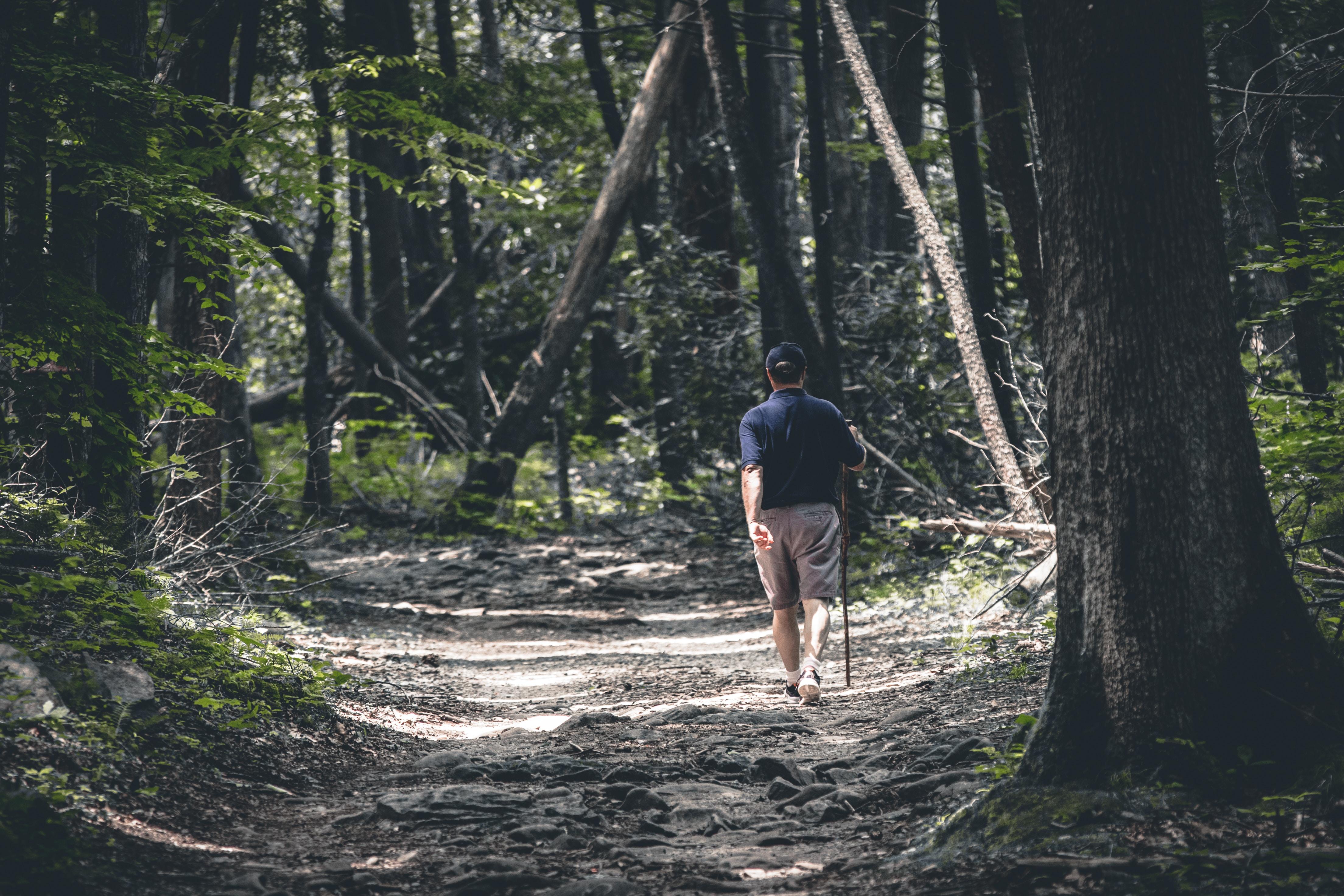 man walking beside trees