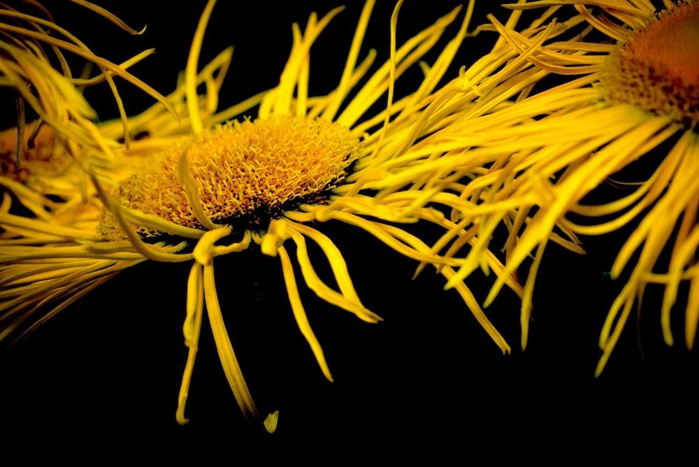 shallow focus photo yellow flower