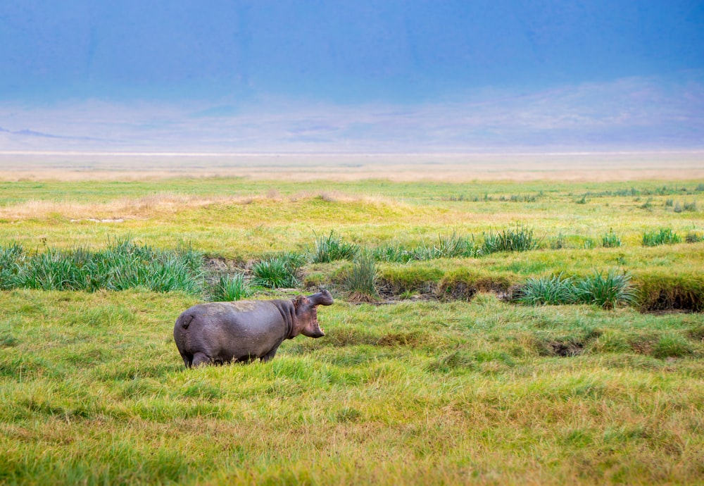 black animal standing on grass field during daytime