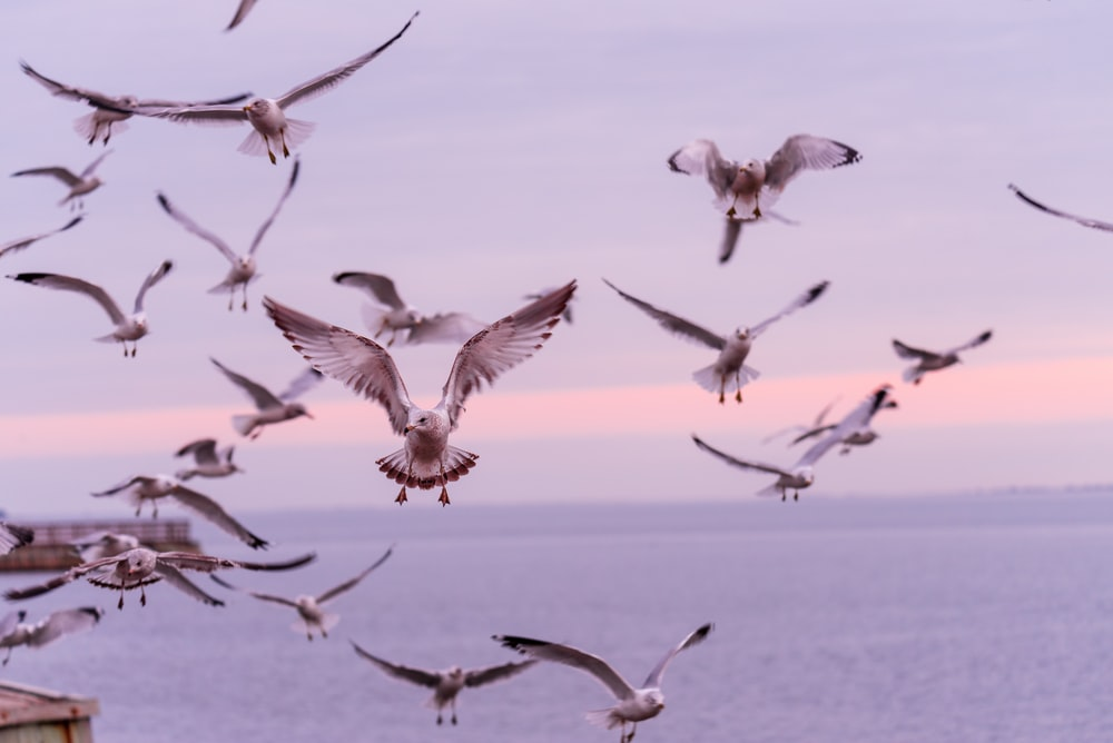 birds flying during blue hour