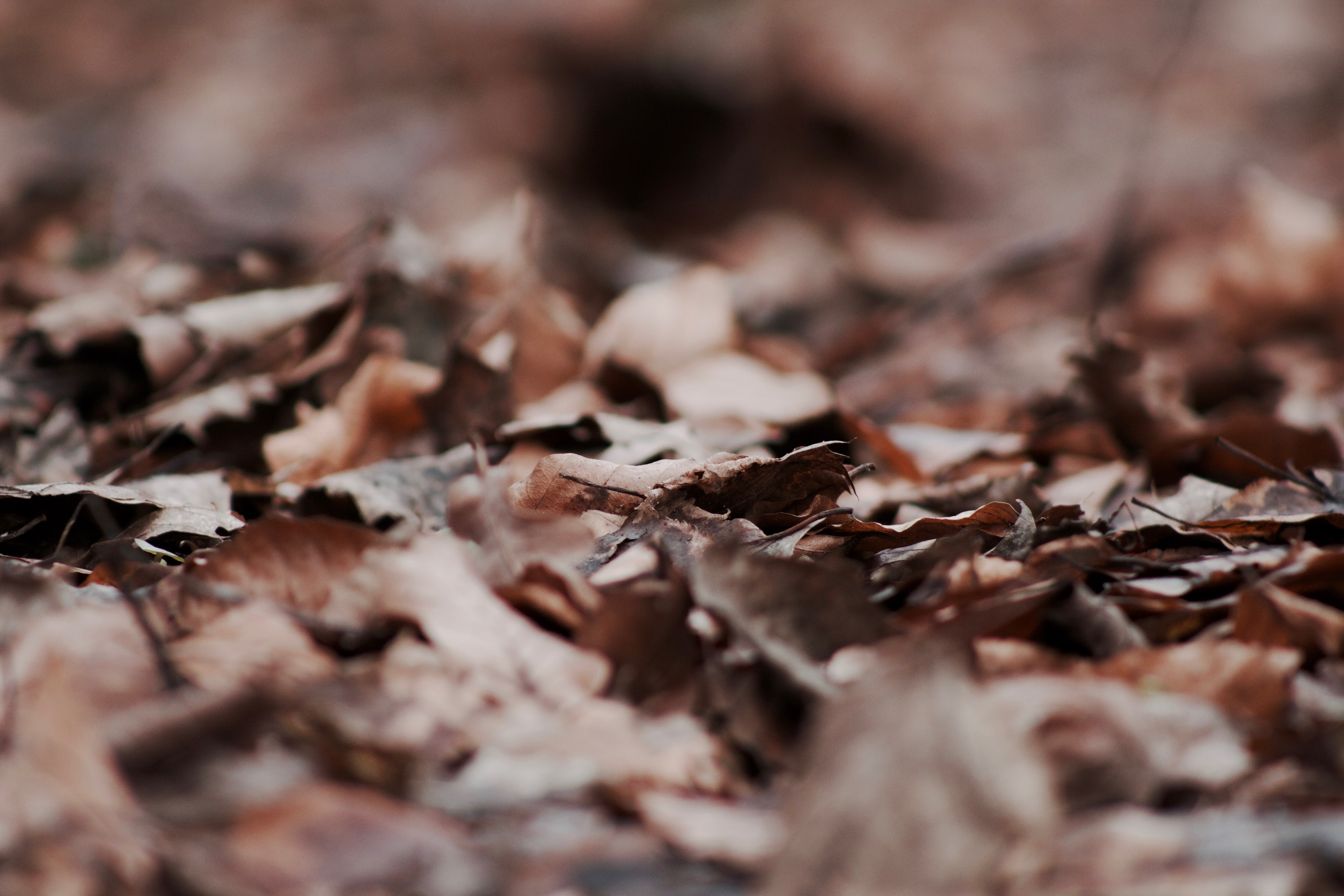focus photography of dried leaves