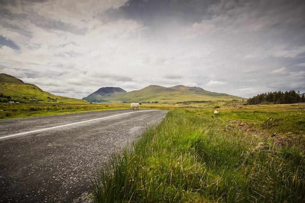 empty road between grass