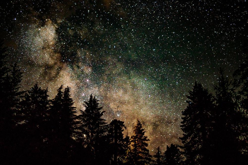 silhouette of tree under starry sky