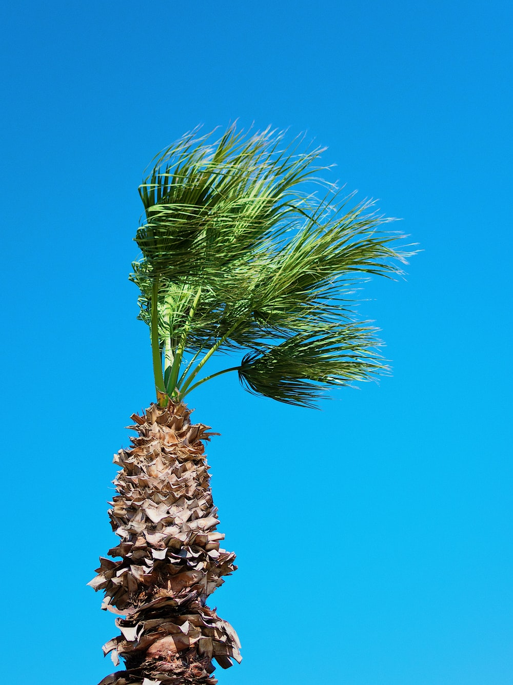 green palm tree under blue skies