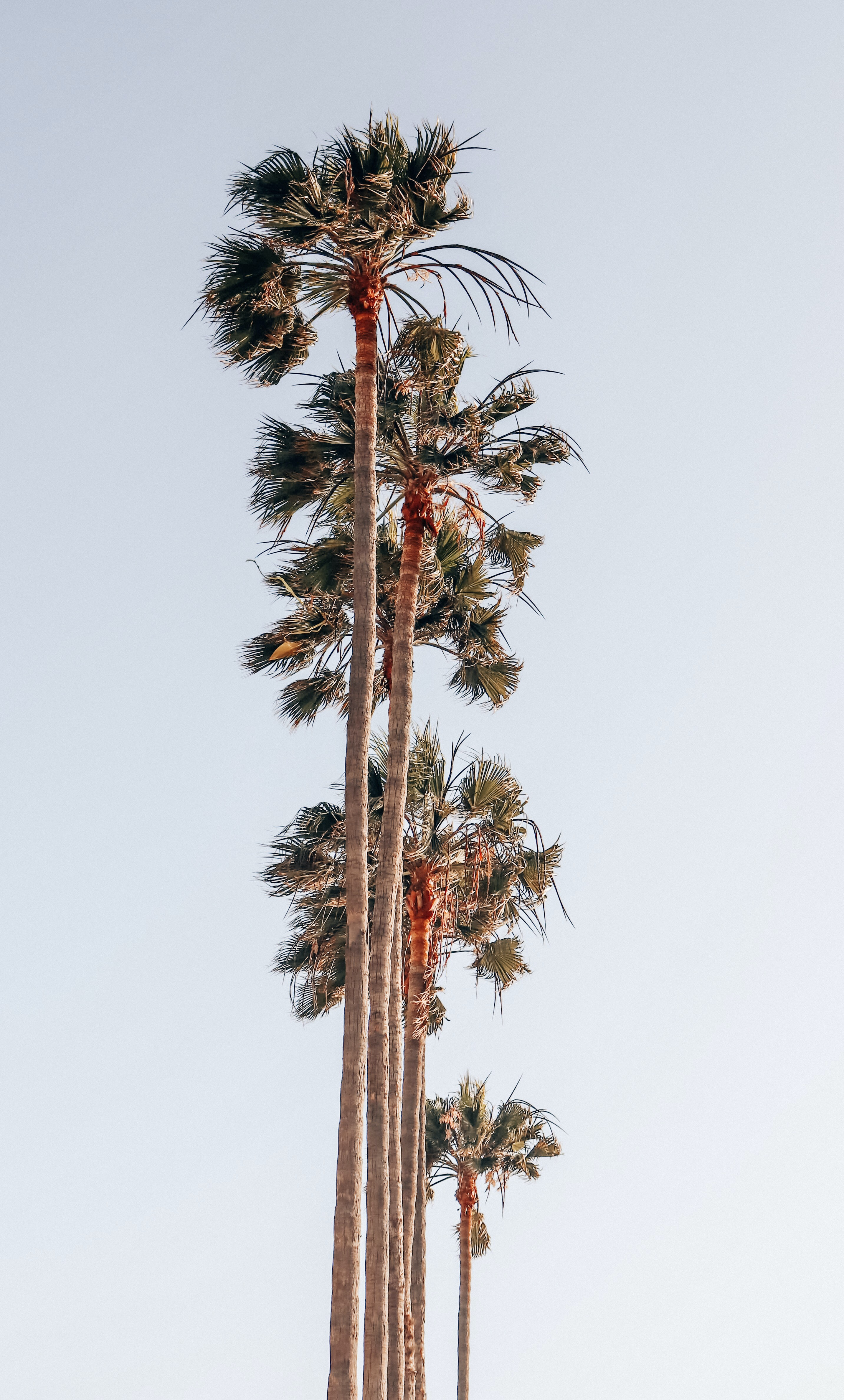 worm's-eye view photography of palm trees