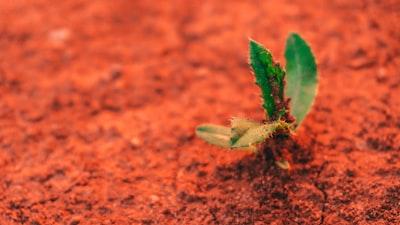 Little Growing Plant