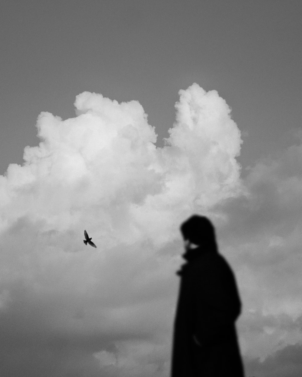 grayscale photography of silhouette of a person and a bird