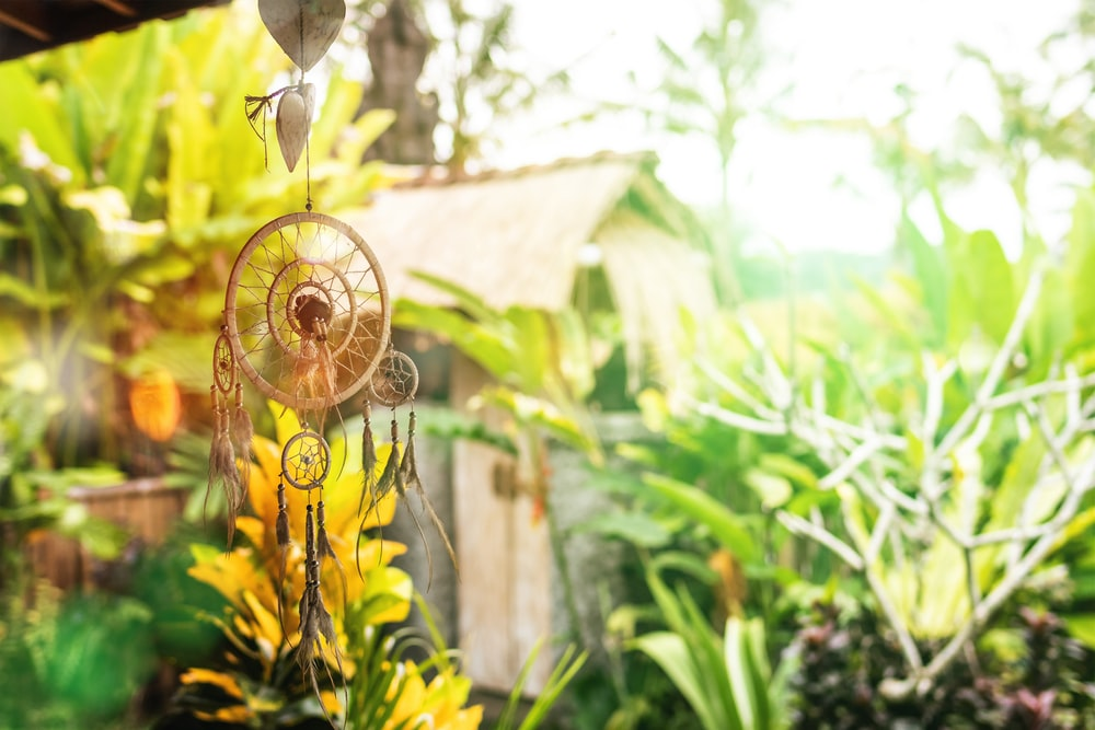Sunny Garden Pictures   Download Free Images on Unsplash