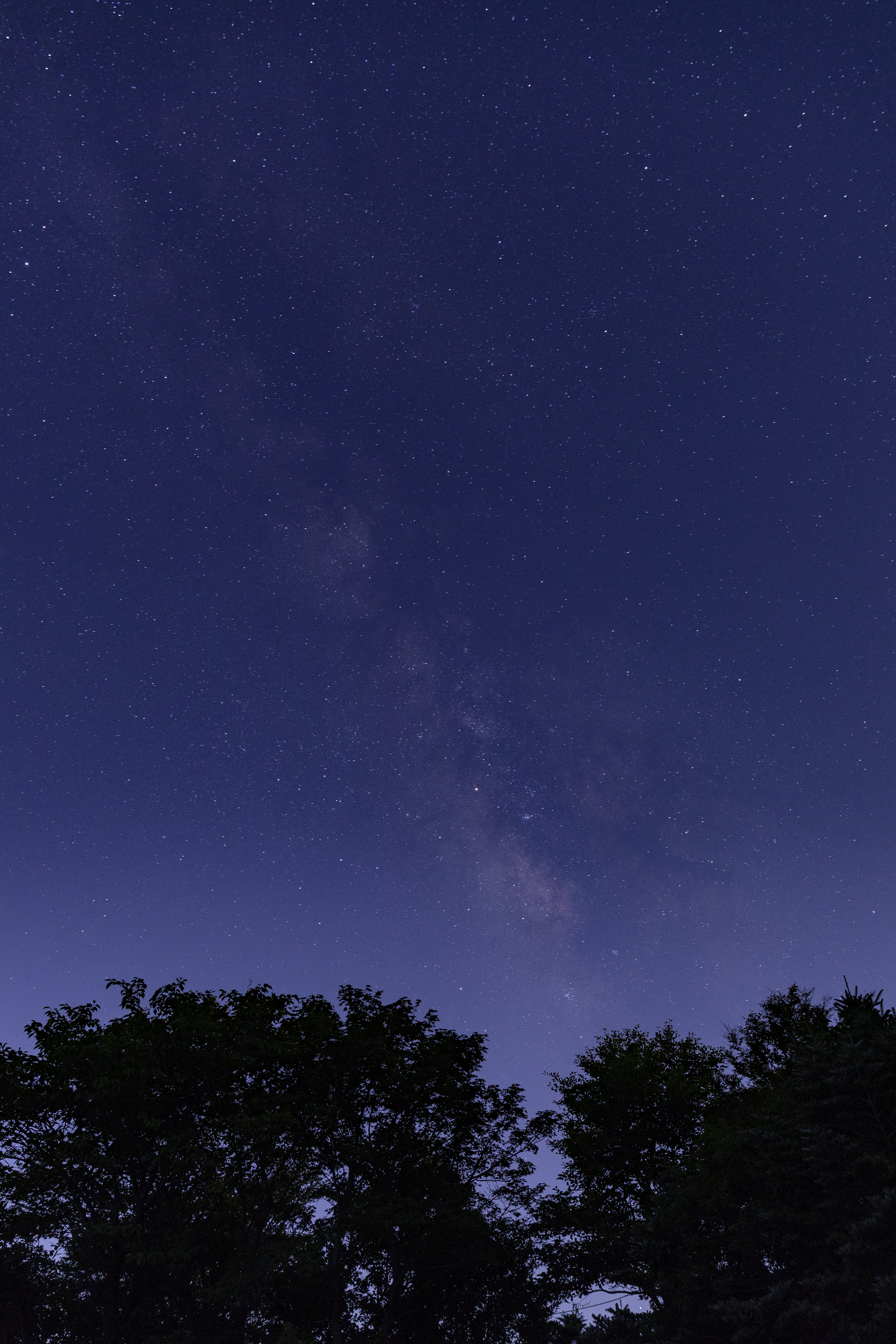 silhouette of tall trees under starry night