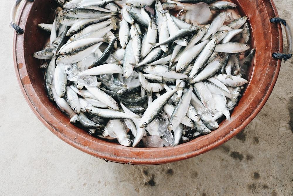 school of fish in tub