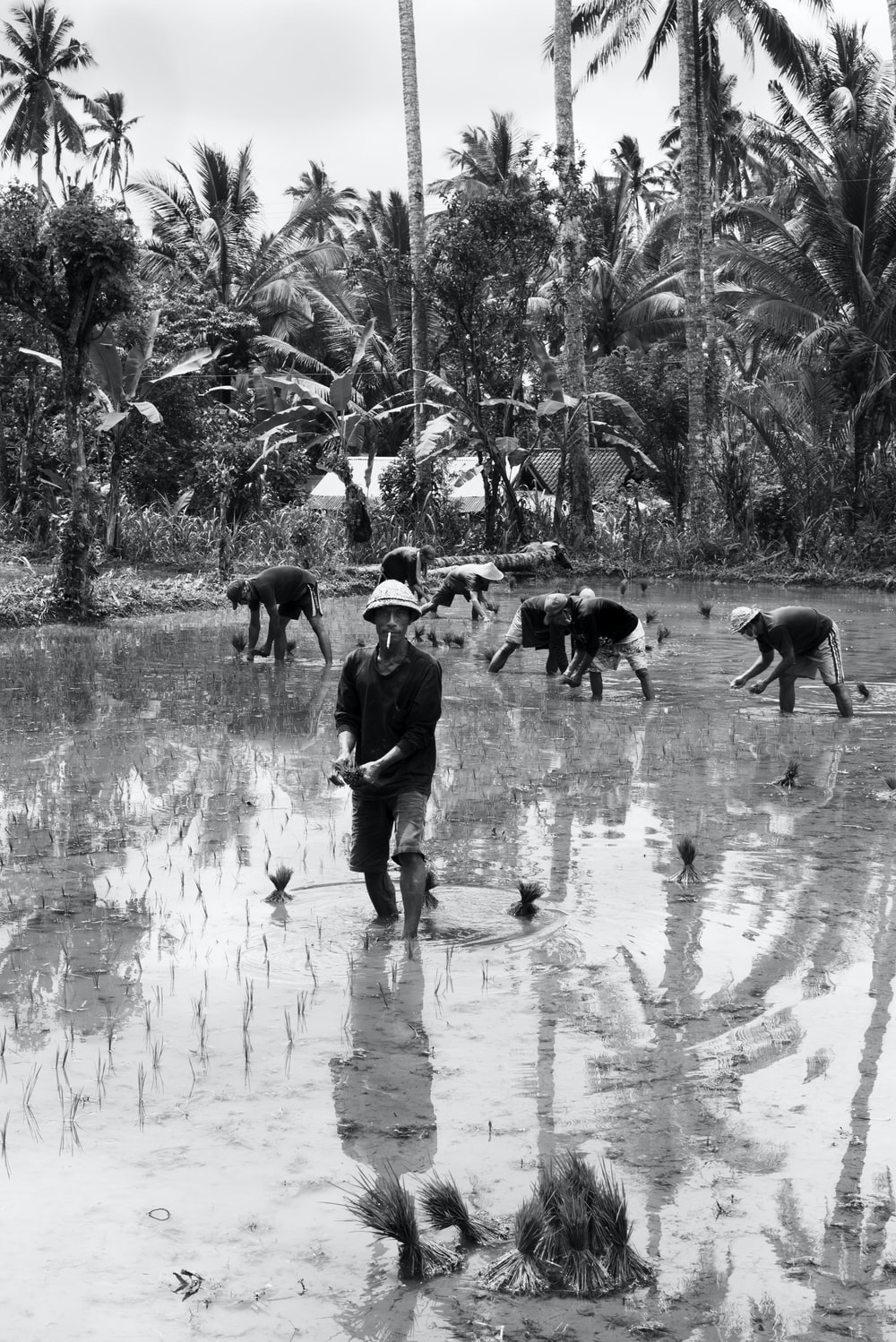 people farming in grayscale photography