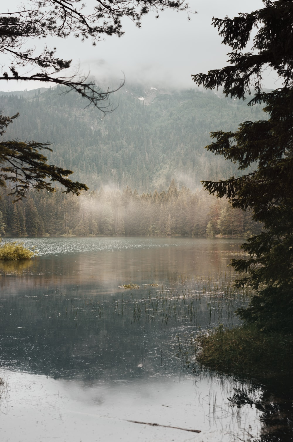body of water surrounded with trees during daytime