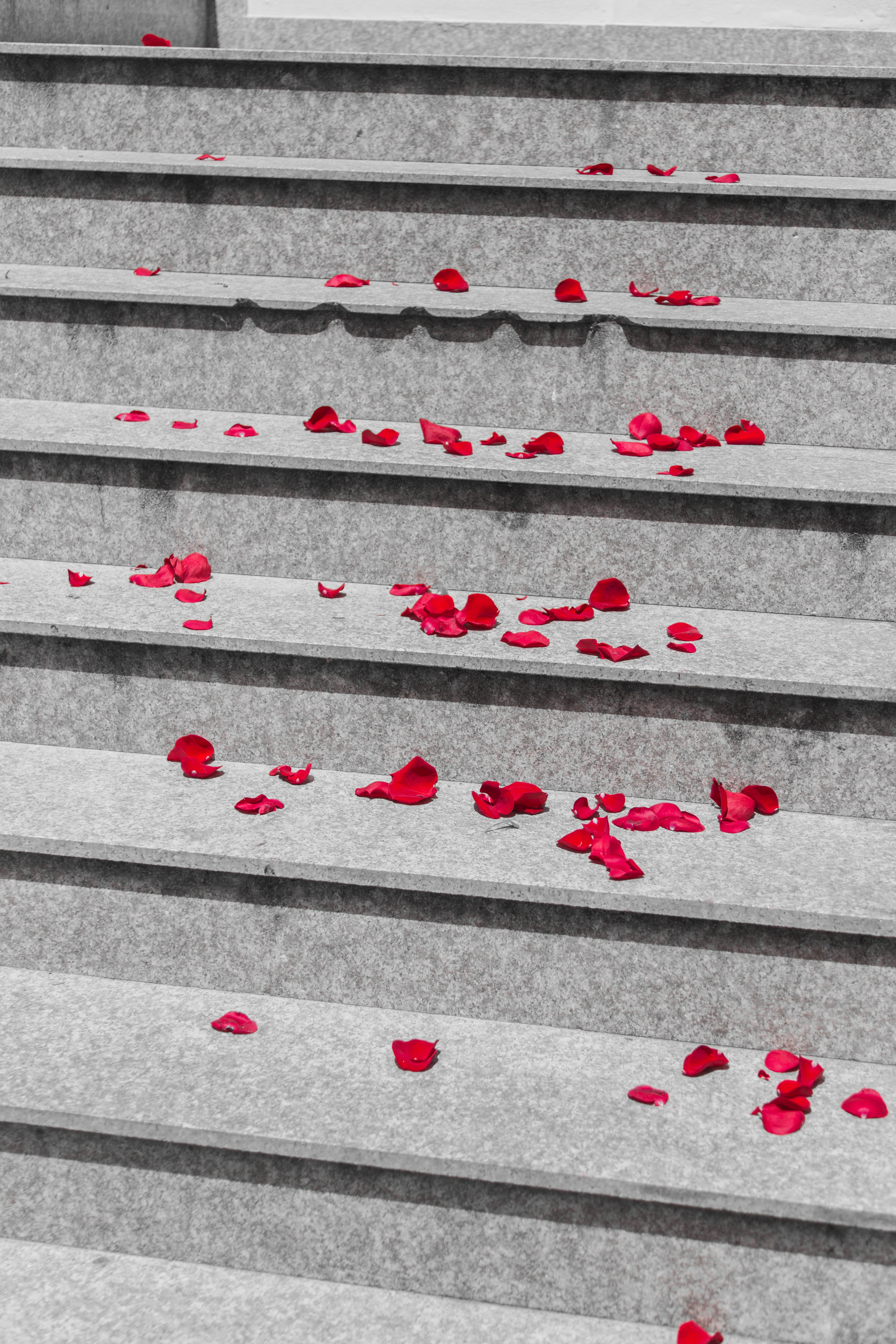 red rose petals on stairs