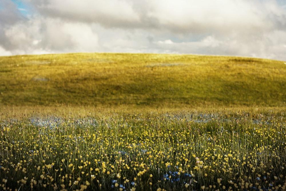 flower fields during daytime
