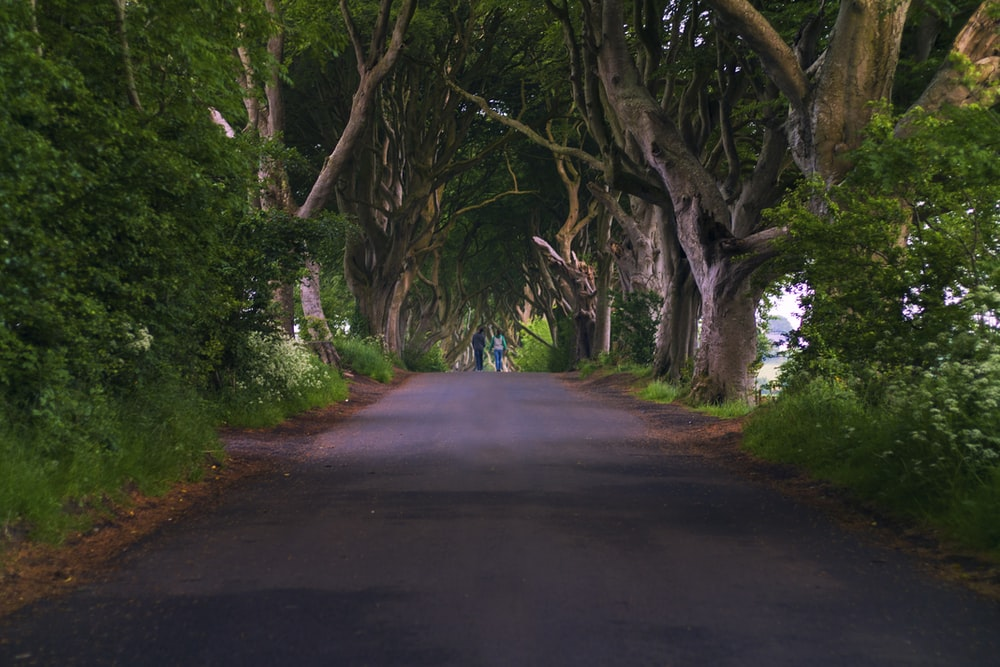 gray road under green and brown trees
