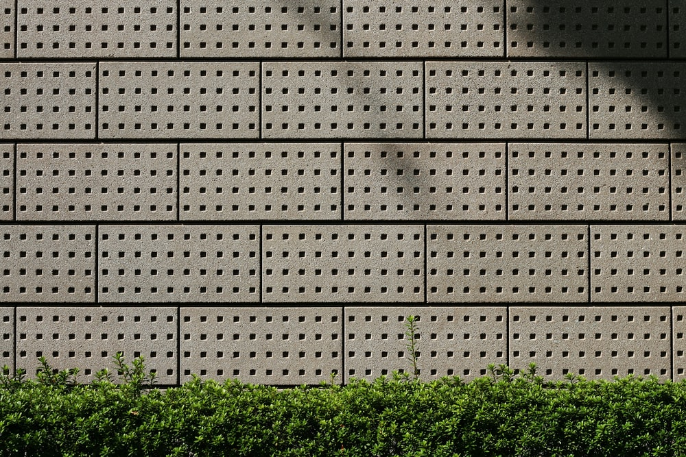green leafed plants on gray concrete brick wall