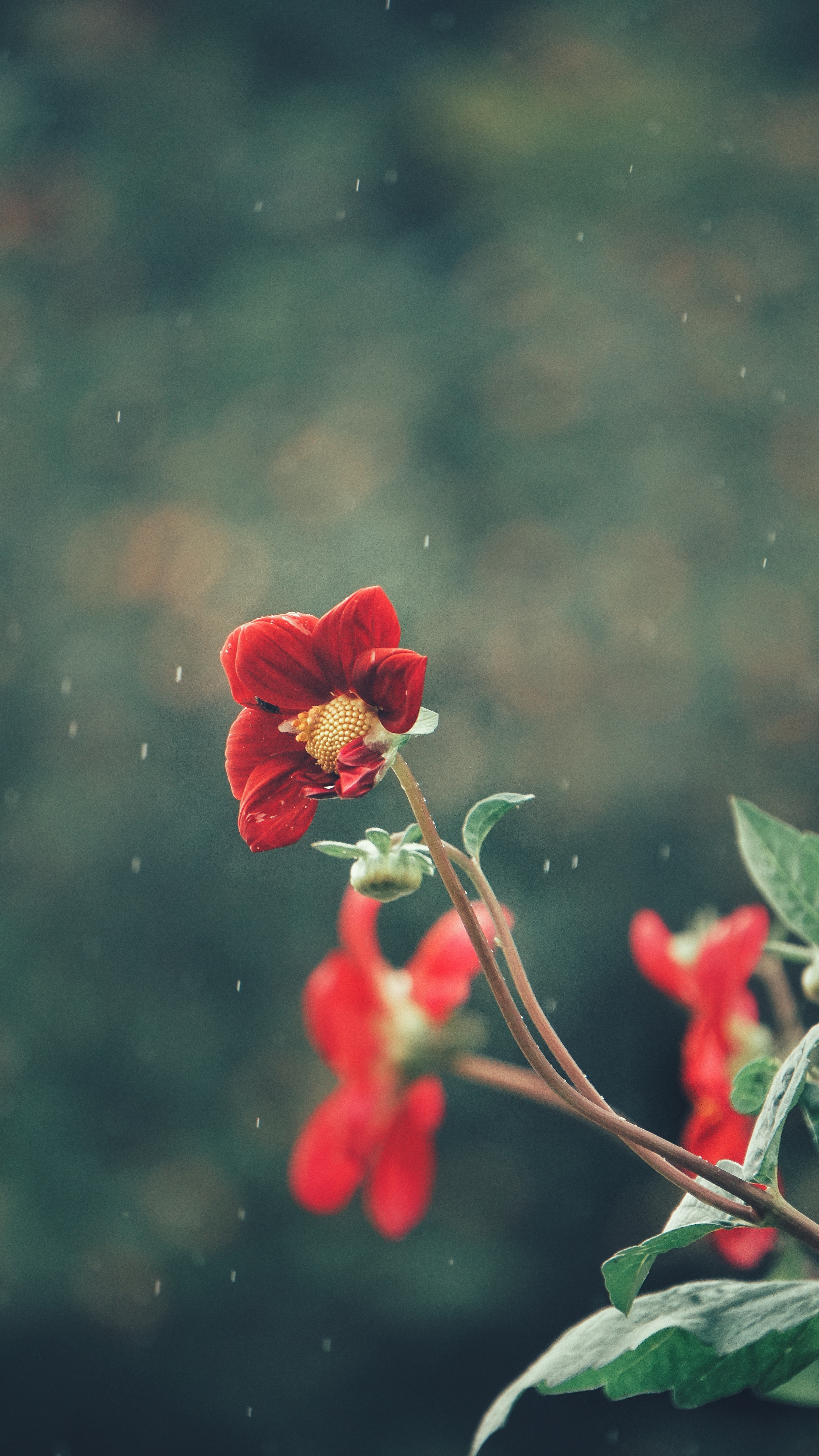 red flower in shallow focus photography