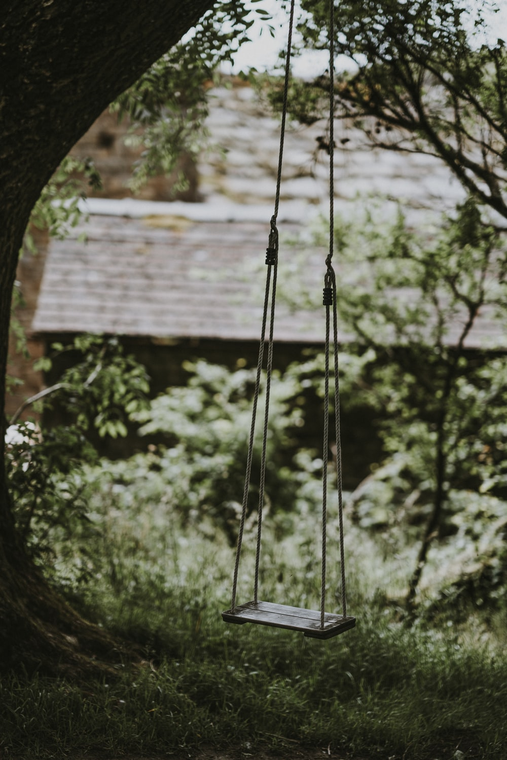 swing hanged on tree