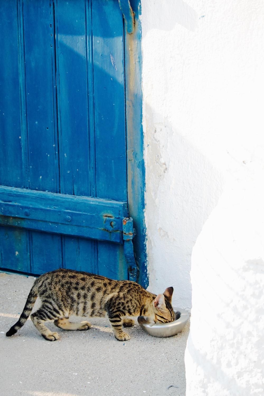 brown tabby cat eating beside wall