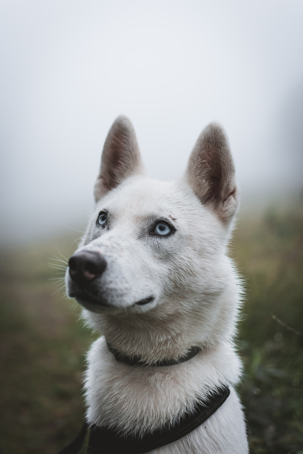 white dog in shallow focus photography