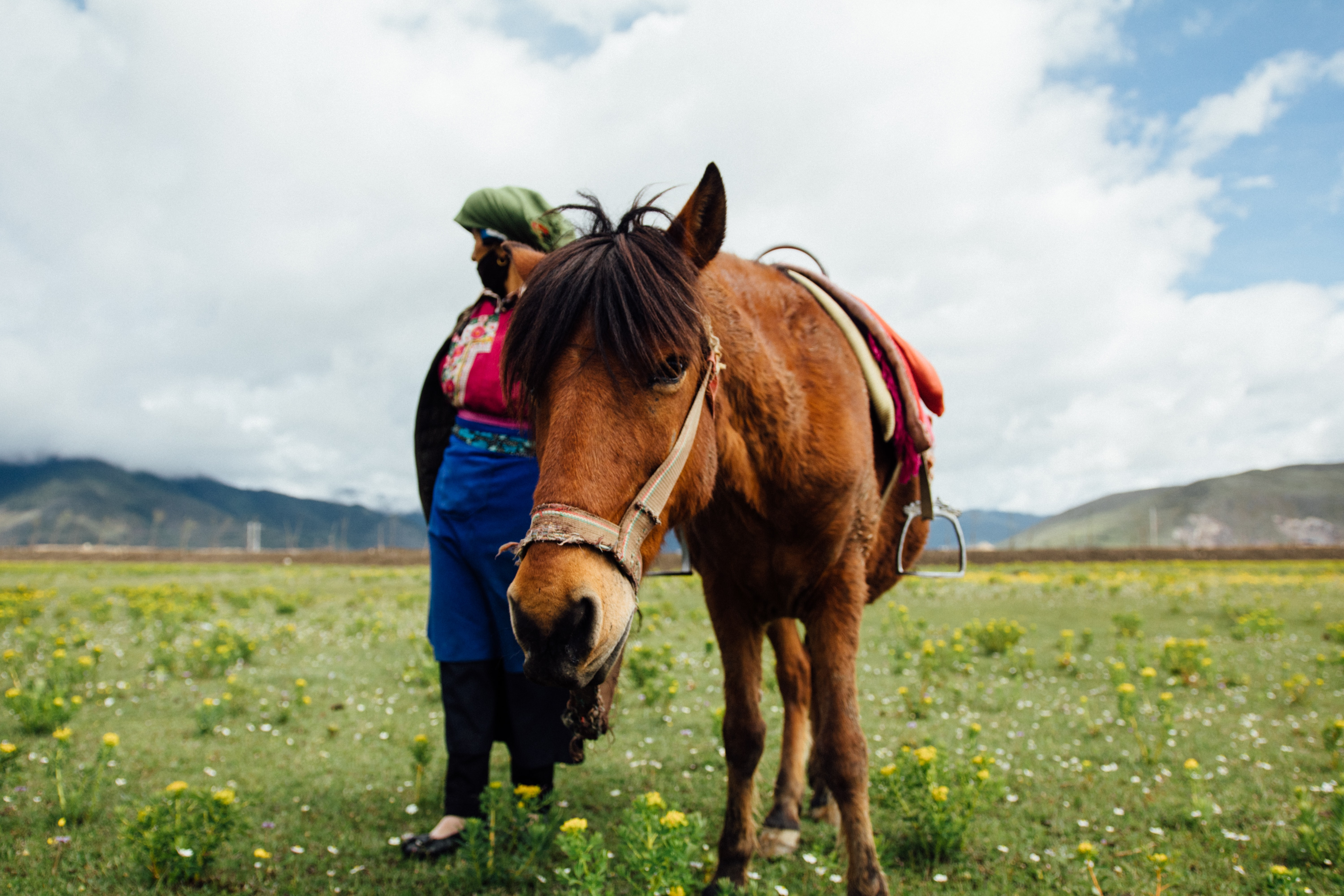 brown horse beside woman on green grass field during daytime