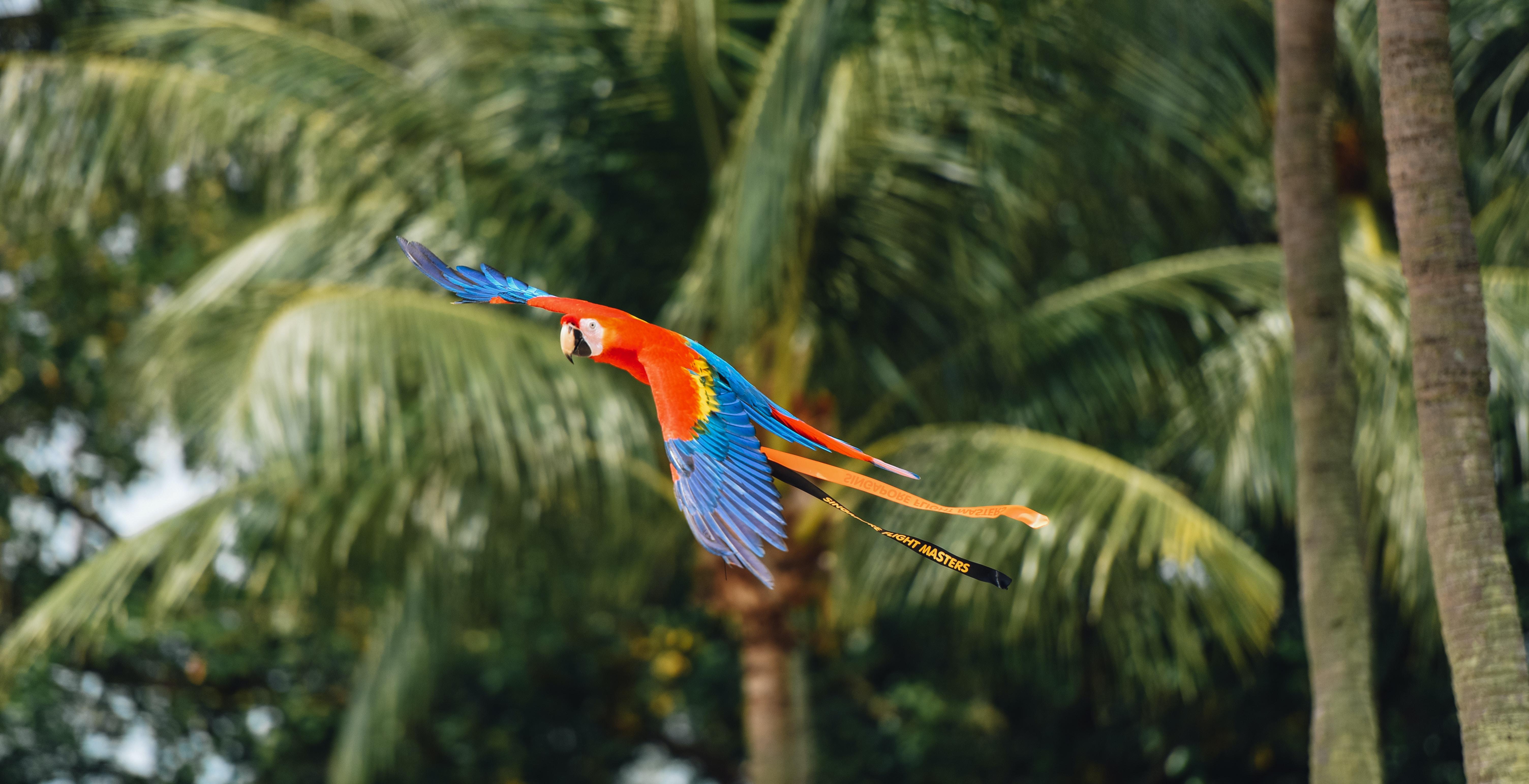 flying birds beside tree