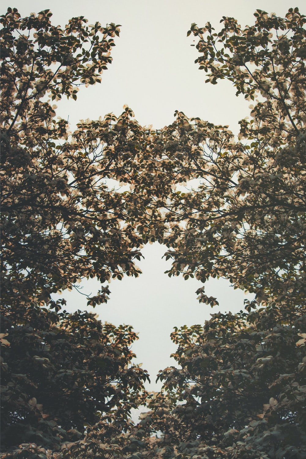 low angle photo of trees with blooming flowers
