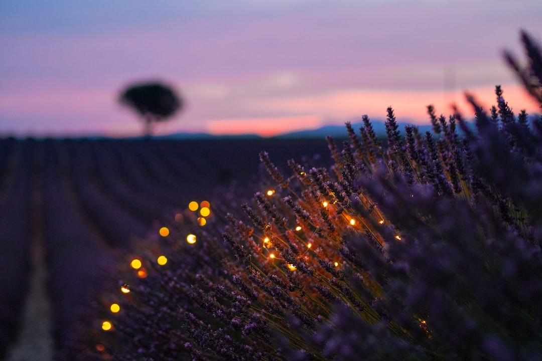 Bokeh in Lavender