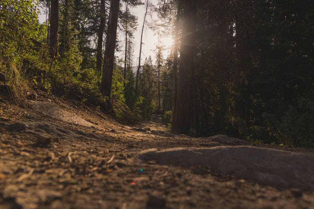 forest under sun rays