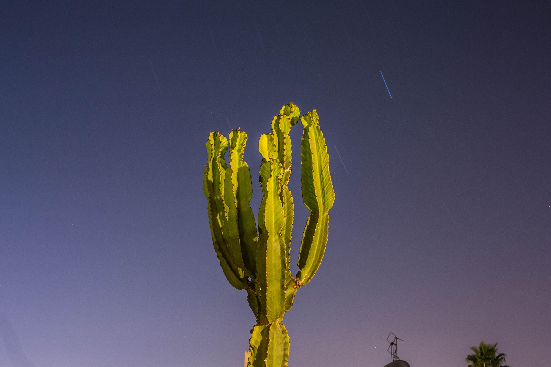 closeup photo of green cactus plant