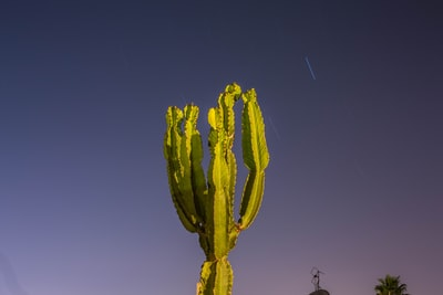 closeup photo of green cactus plant cactu teams background