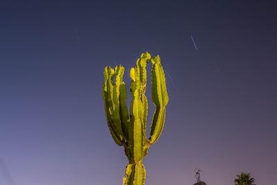 closeup photo of green cactus plant cactu teams background