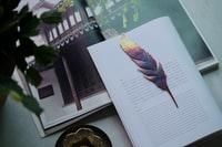 feather on white book page