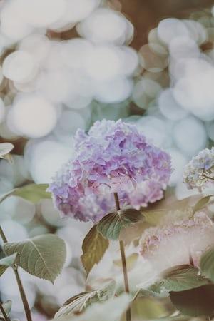 4782. Virágok