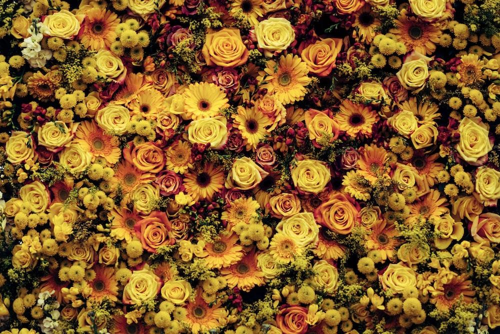 closeup photo of yellow flowers