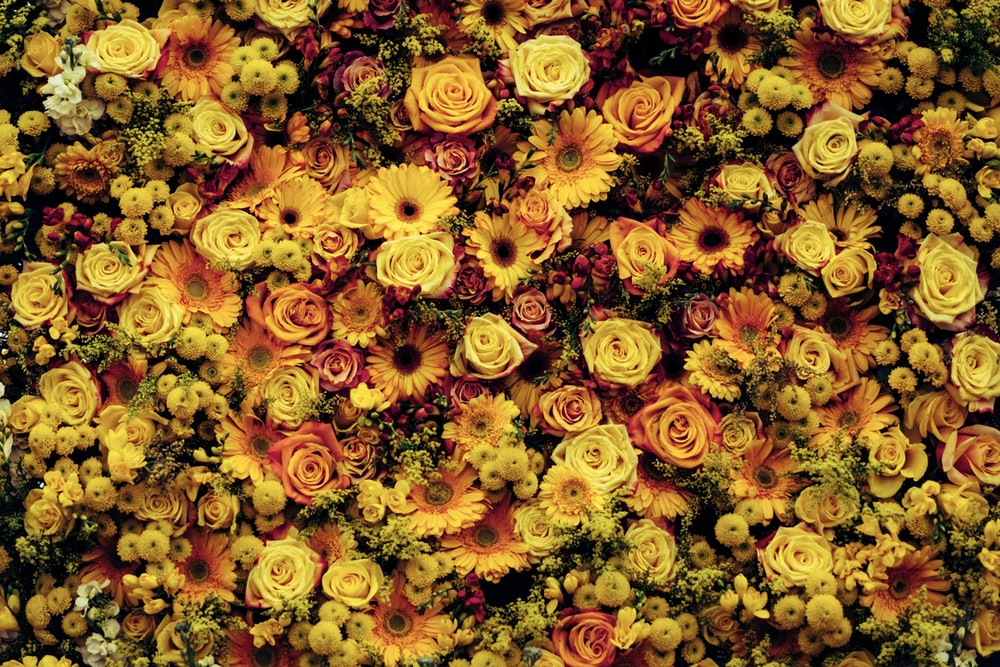 closeup photo of yellow flowers